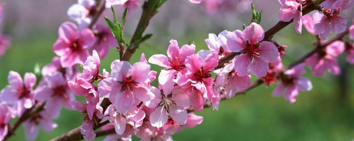 در آستانه بهار نو با امیدهای تازه